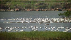Many migratory birds have arrived ChengLong, any of them from your country?