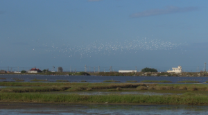 birds flying over the wetlands